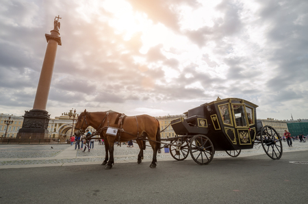 Horses with a carriage on the Palace Square. Russia, Saint-Petersburg. August 17, 2017