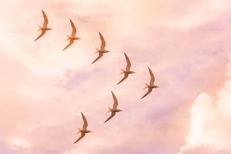 Flock of sea gulls flies in a jamb in the shape of a triangle against the sunset sky of pink shades.