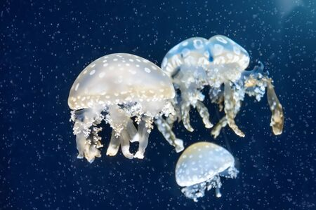 Flock of jellyfish among deep sea waters and bubbles, microcosm