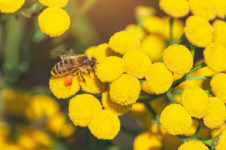 Bees collect honey and pollinate wildflowers on a sunny day Banco de Imagens