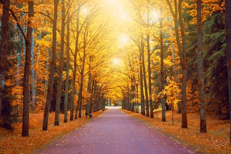 Autumn view of an oak alley with bright light above the crowns a footpath and benches Stockfoto