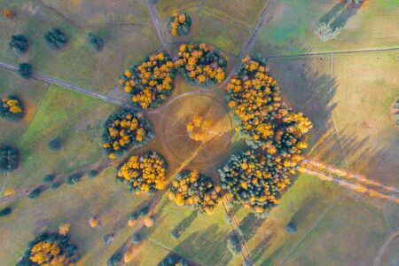 Aerial view of the a group trees planted in a circle in an autumn park with hiking trails, sunlight and forest shadows