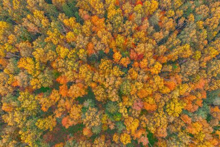 Top aerial view of colourful forest beautiful bright crowns of trees in the autumn season Banco de Imagens
