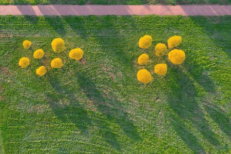 Aerial top view small autumnal willow trees cast shadows on grass lawn in a park among hiking trails in the evening at sunset