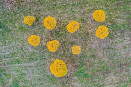 Aerial top view small autumnal willow trees on grass lawn in a park