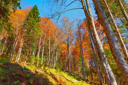 View of the mountainside with a dense autumn forest Stock fotó