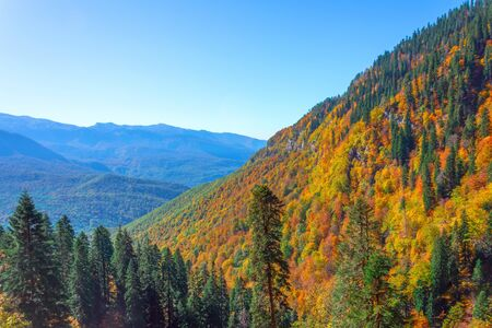 View of a mountain gorge with a dense forest, spruce, oaks, and other trees in autumn colors Banco de Imagens