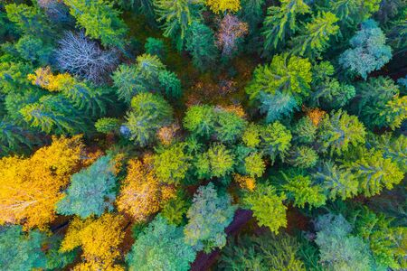 Spruce forest in autumn with yellow deciduous trees top aerial view Stock fotó