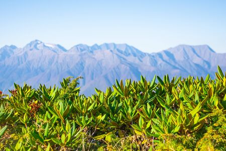 Panoramic view of the mountain peaks and clear blue sky, in the foreground mountain vegetation grass in focus