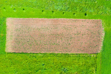 Plowed field with planting potatoes among grassy meadows top aerial view Stock Photo - 150845347