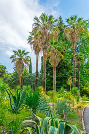 Thickets of different palms agave and other succulent plants in a tropical Mediterranean park