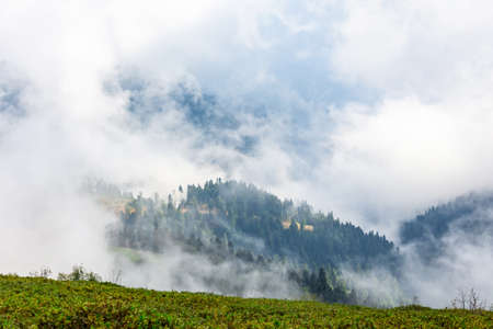 Majestic view on beautiful fog mountains in mist landscape. Alpine meadows in the foreground. In the distance the top of a mountain covered with a forest in the clouds Stock Photo