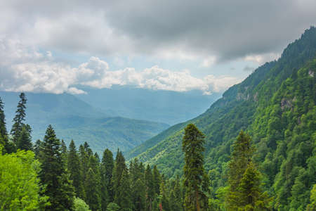 View of the mountain gorge and forest valley on the mountain slopes