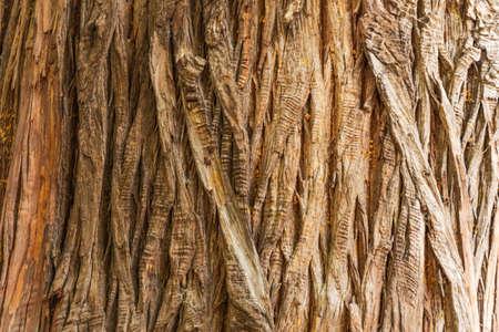 Bark of a century-old tree, near the texture