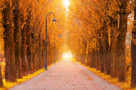Autumn alley with rows of poplars and street lamps along the hiking trail, tunnel with light