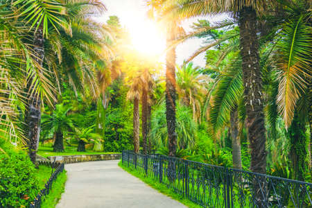 Walking path and alley of different palms in a tropical Mediterranean park