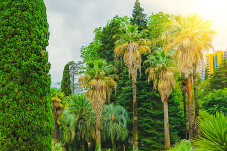 Cypress trees and thickets of different palms in a tropical Mediterranean park