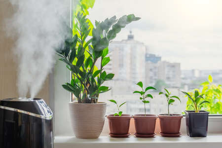 Indoor decorative and deciduous plants on the windowsill in an apartment with a steam humidifier, against the background outside the window of the city and multi-storey buildings