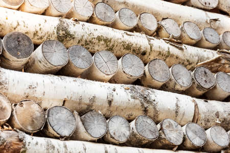 Birch tree logs stacked in different ways