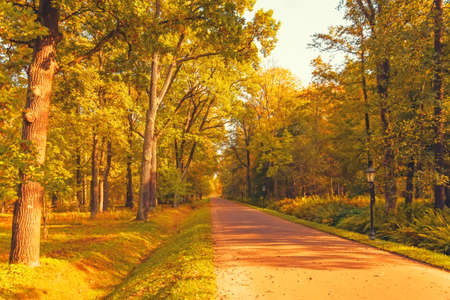 Oak alley with a hiking trail in the park on an autumn sunny day Standard-Bild