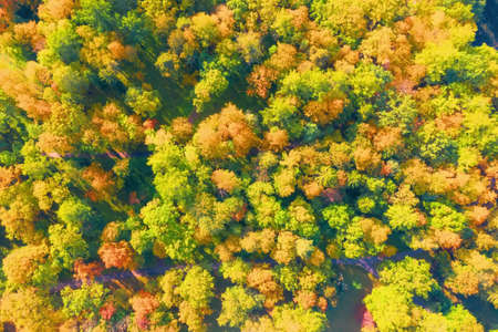 Beautiful autumn park dense forest aerial view Standard-Bild