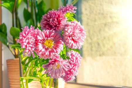 Pink asters in a vase on the table at home