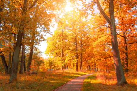 Autumn november park with yellow oaks and maples around the hiking trail Reklamní fotografie