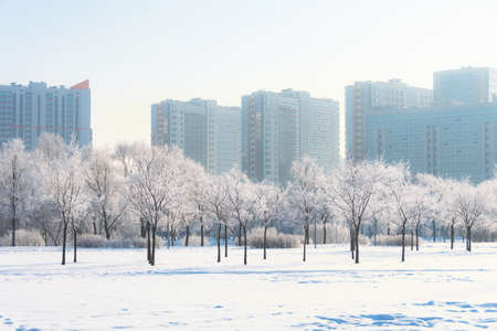 A city park in hoarfrost after a night fog, multi-storey residential buildings in the distance