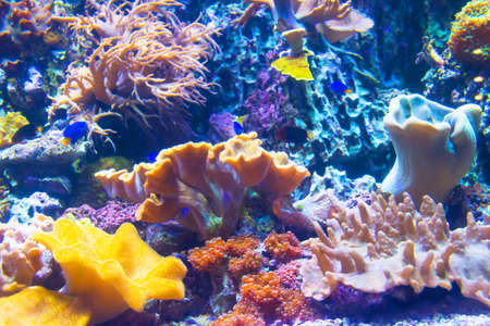 View of the coral fauna at the bottom of the tropical sea