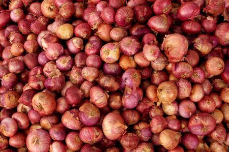 farm fresh: fattoria fresco sparsi cipolle per la vendita al mercato locale