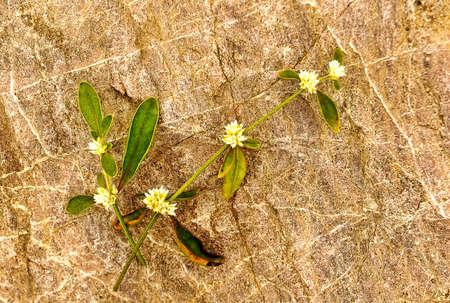 lifeless: Withered leaf on a lifeless stone