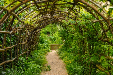Green foliage, wood and plants tunel in the garden Reklamní fotografie - 116862145