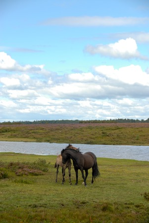 two horses caressing