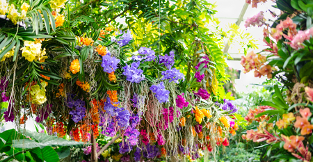 Beautiful colorful flower arangement made of orchid flowers