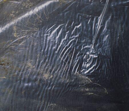 crumpled polyethylene texture, under polyethylene, fungus in the form of algae in a pond