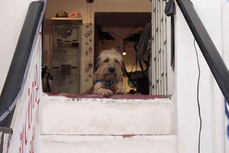 watchdog: Watchdog Stock Photo