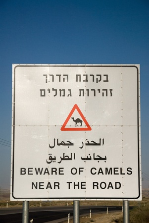 Road sign about loose camels on a way through the Negev desert,Israel photo