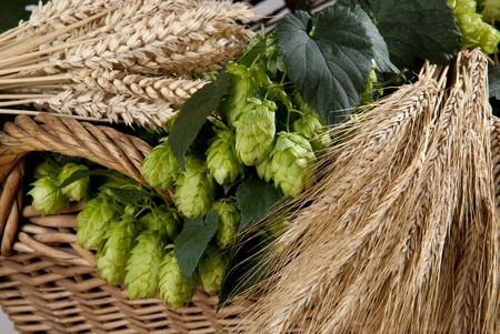 brouwerij: hopbellen met gerst Stockfoto
