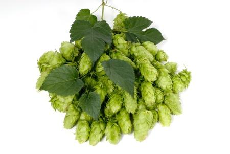 humulus: hop cones