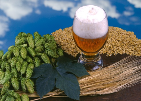 still life with beer Stock Photo - 10498789