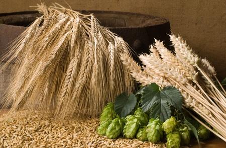 malto d orzo: frumento con coni di luppolo Archivio Fotografico
