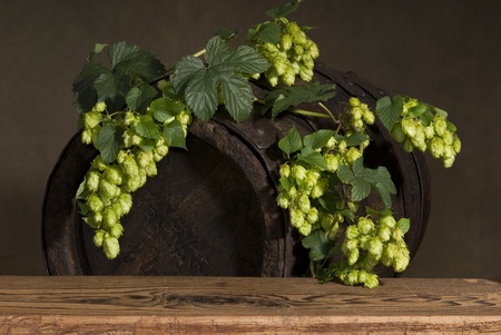 still life with hops Stock Photo - 10509009