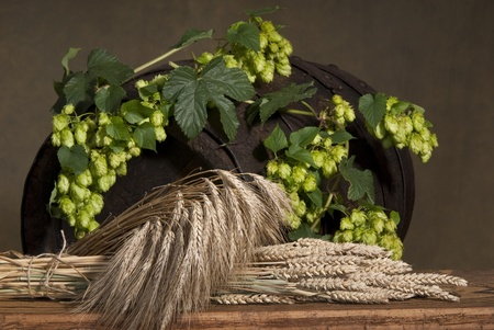 still life with hops Standard-Bild