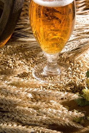 hop hops: beer Stock Photo