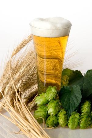 beer Stock Photo - 10519934