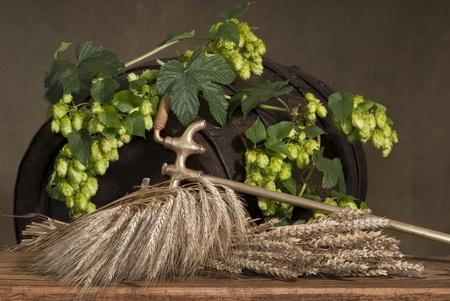 still life with hops Standard-Bild
