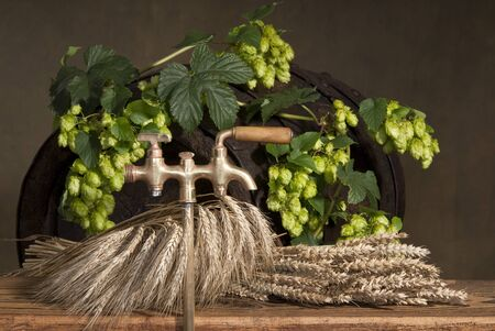still life with hops and barley Stock Photo - 10572206