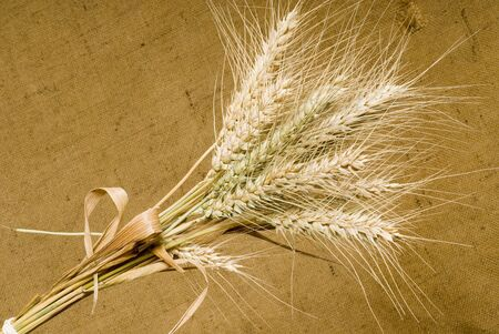 spalt: wheat Stock Photo
