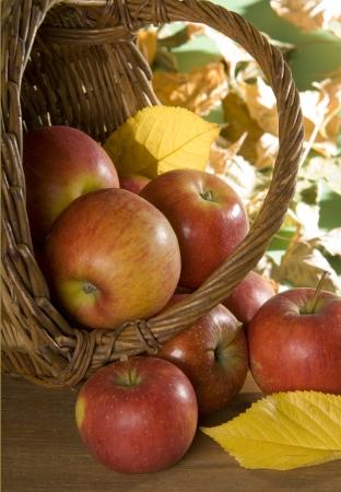 natur: Natura morta con mele