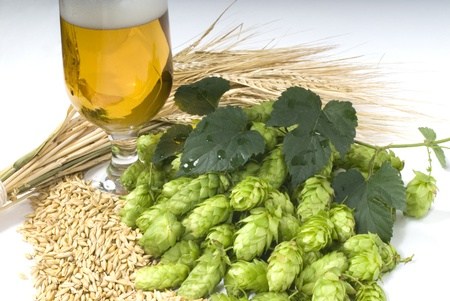 beer Stock Photo - 10600907